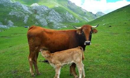 Mejoras en ganadería con introducción de probióticos