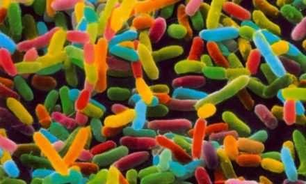 El fascinante microbioma humano (qué es y por qué es importante que lo sepas)