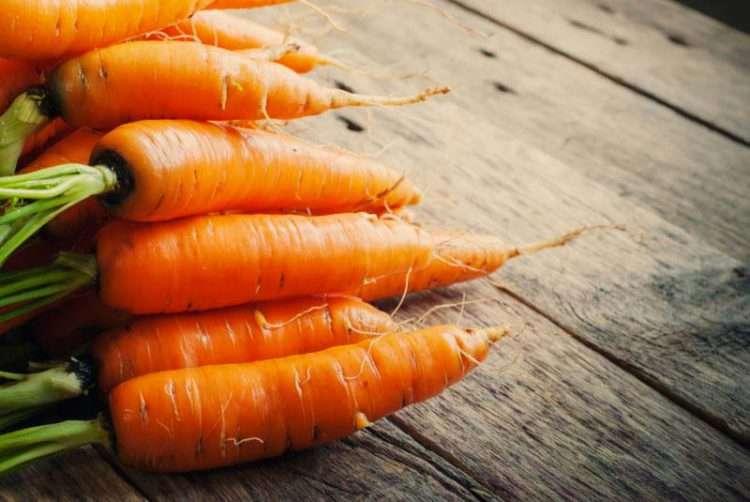 Estos son los 8 alimentos más saludables con los que debes alimentar a tu perro