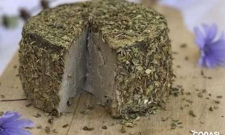 Queso tierno fermentado de soja germinada, nueces y Kombucha